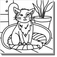 Obraz, Kočka + barvy, 50x50 cm