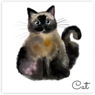 Plakat, Cat, 30x30 cm