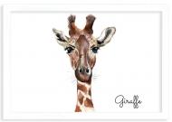 Plakat w ramce, Giraffe - biała ramka, 30x20 cm