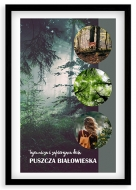 Plakat w ramce, Puszcza Białowieska - czarna ramka, 20x30 cm