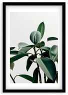 Plakat w ramce, Liście - czarna ramka, 20x30 cm