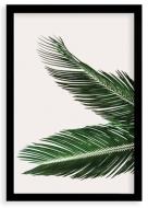 Plakat w ramce, Plakat palma- czarna ramka, 20x30 cm