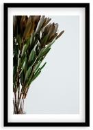 Plakat w ramce, Roślina - czarna ramka, 20x30 cm