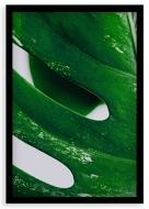 Plakat w ramce, Monstera Liść - czarna ramka, 20x30 cm