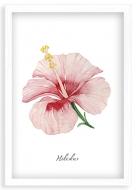 Plakat w ramce, Hibiskus - biała ramka, 20x30 cm