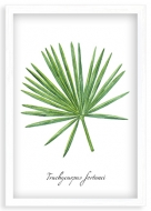 Plakat w ramce, Palma akwarela - biała ramka, 20x30 cm