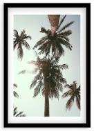 Plakat w ramce, Palmy - czarna ramka, 20x30 cm