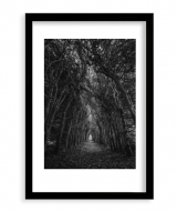 Plakat w ramce, Las czarno-biały, 20x30 cm