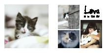 Nasz kot  fotoksiążka, 20x20 cm