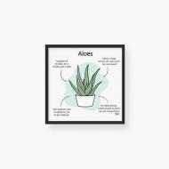 Plakat w ramce, Kolekcja Długopisem Malowane - Aloes Zwyczajny - czarna ramka, 35x35  cm
