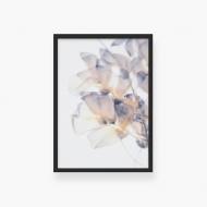 Plakat w ramce, Kwiat , 30x40 cm