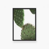 Plakat w ramce, Plakat kaktus- czarna ramka, 20x30 cm